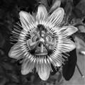 Pointy Pinwheel