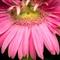 Garden Closeups June 2012-25