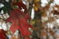 Fall Fading
