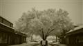 April snow on tree
