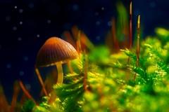 Mycorrhizal Fungi.