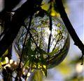 Spring ball tree