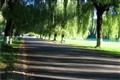 Cool and Shadowed path