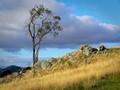 Tree and rocks 2