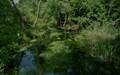 Wilanowka river