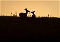 deer on a hill, badlands np