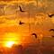 BirdsBricks