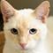 Jewel_20180626_ARL Cat_002-24