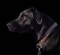 My dog Girlie Girl