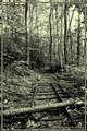 The Old Logging Railroad