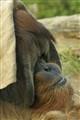San Diego Zoo_043