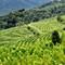 P8240227 smaller: Wachau region of Austria. Love those patterns in the vineyards
