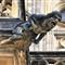 St Vitus Cathedral gargoyle 1