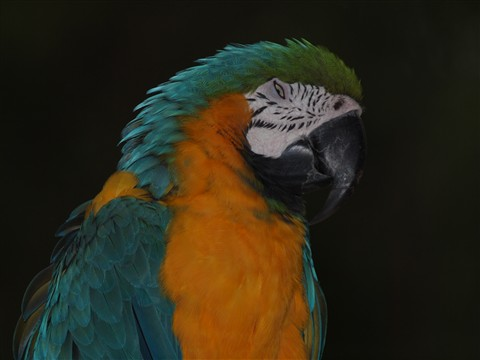 P2183436_Blue-and-Yellow Macaw