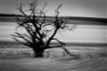 Tree @ 140kph