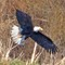 IMG_6427_eagle-1