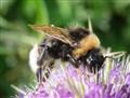 Pollen Scoffing