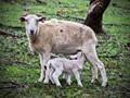 Mothers milk