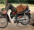 Sleeping on Bicycle