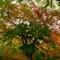 NY Central Park tree
