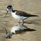 seabirds1