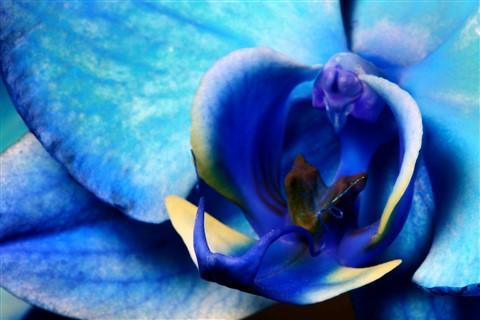 Sensual Blue
