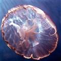 Inside a Jellyfish
