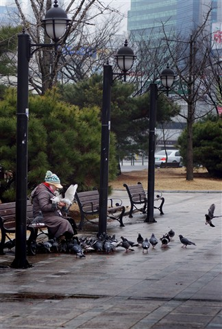 feeding the birds....Rainy Day daegu Korea