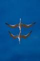 Twin Terns-2704