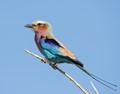 Taken in Botswana