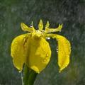 Under the rain !