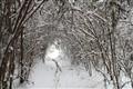 snowtunnel1280