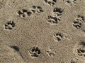sandy paws