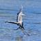 IMG_8404_heron-incoming