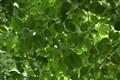 T H I N K    Green