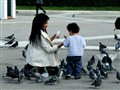 Feeding the pigeons
