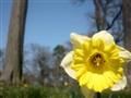 Flower in Potsdam