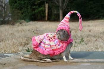 rat-in-hat