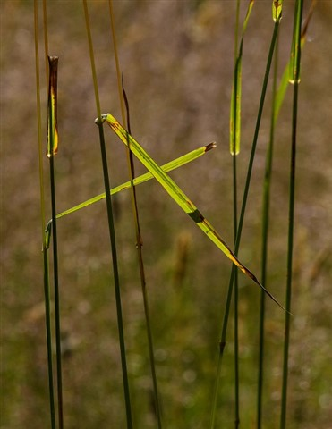Elwha_Grass_1_071913_reduced