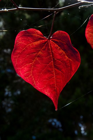 leaf_1_NNK1378