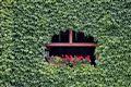 la casa verde con fiori