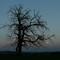 Bare Tree byTwilight