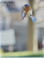 Blue Bird in Flight