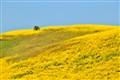 San Clemente, Yellow