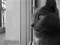 Staring at..?