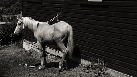 Hertfordshire horse