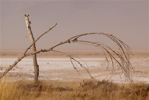 HarperDryLake_Trees