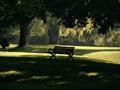 Morning light at Gibbons Park