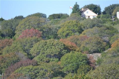 Trees 006,November,2,2012 (10)