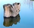 Stump & Reflection